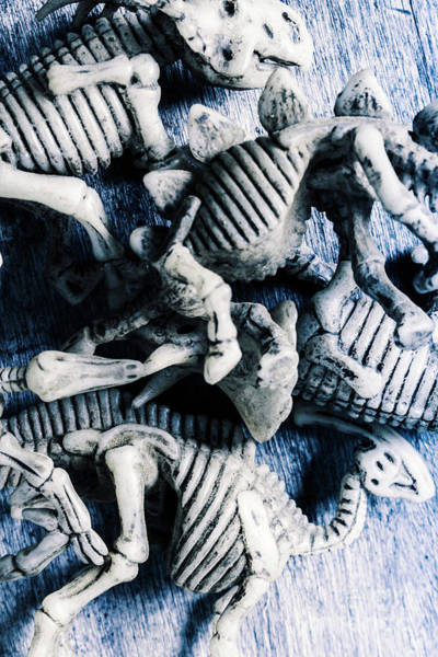 Artifacts Wall Art - Photograph - Bones From A Mass Extinction Event by Jorgo Photography - Wall Art Gallery