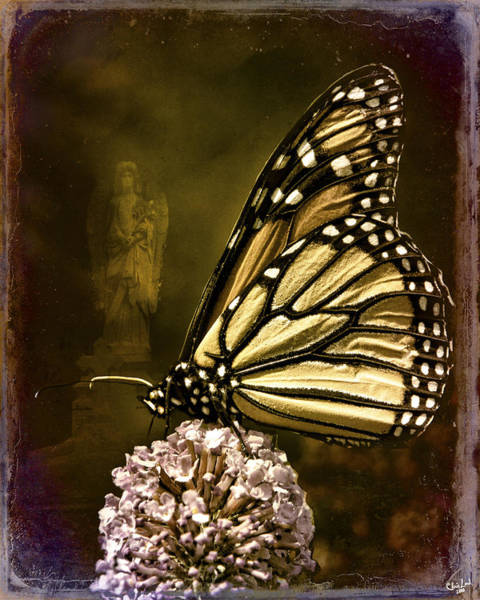 Photograph - Boneyard Butterfly by Chris Lord