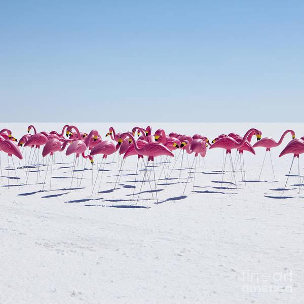 Pink Flamingos Photograph - Bonneville Salt Flats Usa by Paul Edmondson