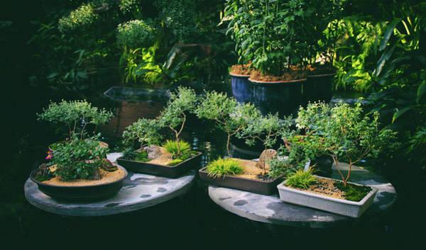 Photograph - Bonsai Afloat by Jessica Jenney