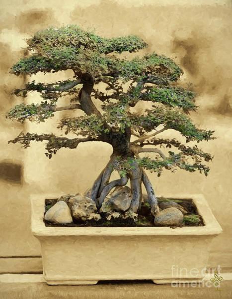 Bonsai Tree Digital Art - Bonsai Dreams by Syed Muhammad Munir ul Haq