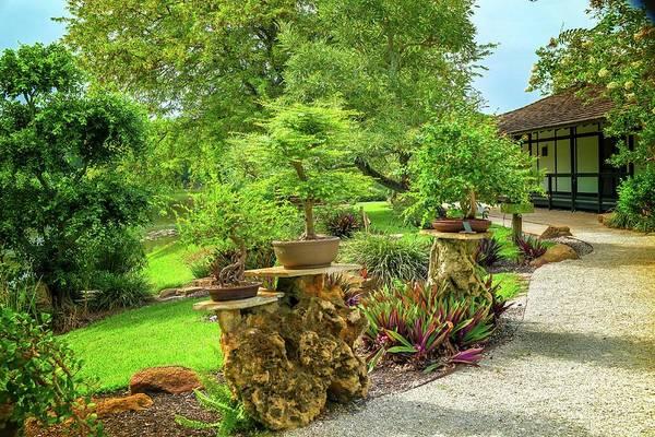 Wall Art - Photograph - Bonsai Japanese Garden  by Louis Ferreira