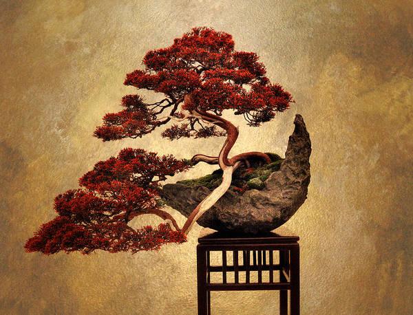 Photograph - Bonsai  by Jessica Jenney