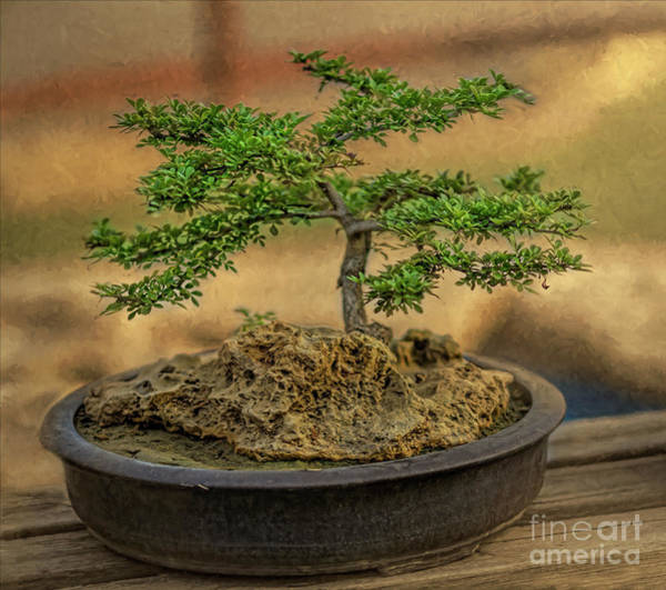 Bonsai Tree Digital Art - Bonsai Life by Syed Muhammad Munir ul Haq