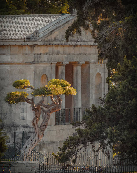 Photograph - Corfu, Greece - Bonsai by Mark Forte