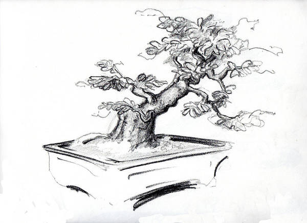 Drawing - Bonsai  by Thomas Lupari