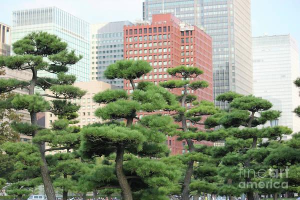 Photograph - Bonsai Tokyo by Wilko Van de Kamp