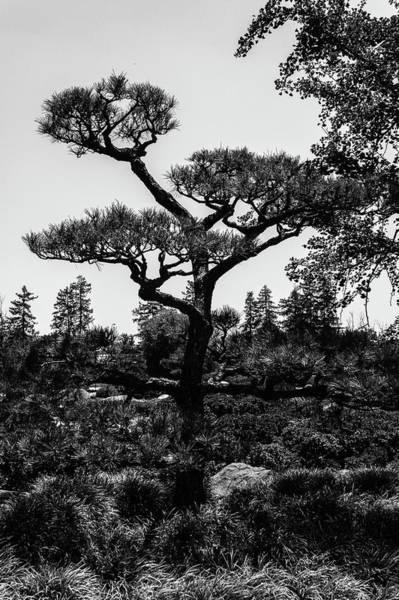Bonsai Tree Digital Art - Bonsai Tree by Justin Emord
