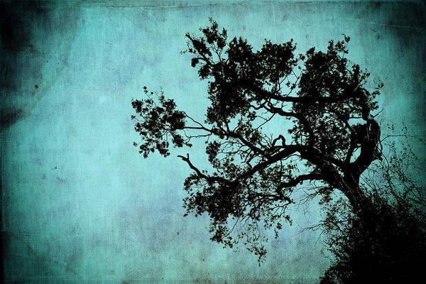 Photograph - Bonsai Tree Of The Night by John Williams