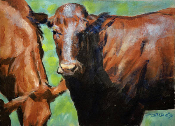 Painting - Bonsmara Cow by Christopher Reid