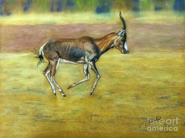 Pastel - Bontebok by Lance Sheridan-Peel