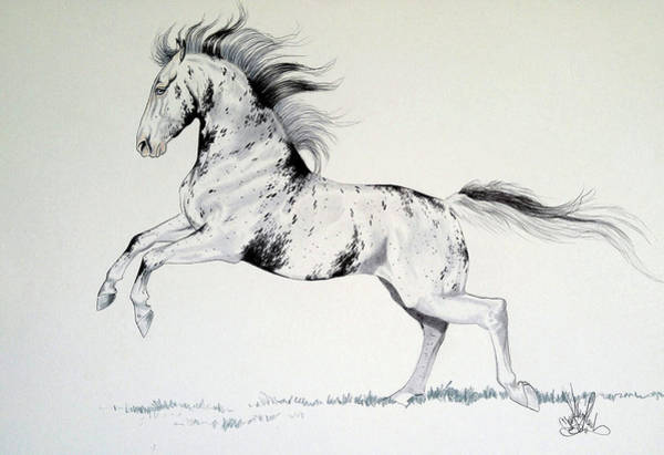 Appaloosa Drawing - Loud Appaloosa by Cheryl Poland