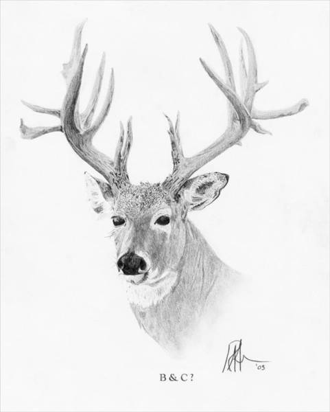 Whitetail Drawing - Boone And Crockett by Ryan Friesen