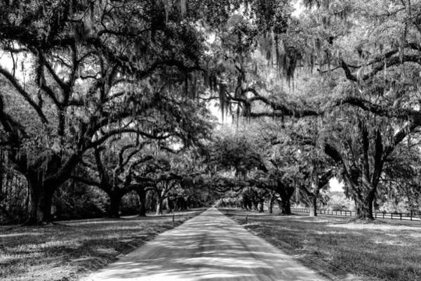 Photograph - Boone Plantation Charleston by Louis Dallara