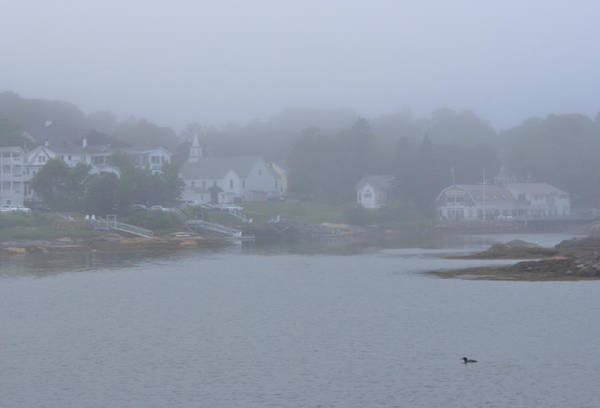 Wall Art - Photograph - Boothbay Harbor Loon In Fog by John Burk