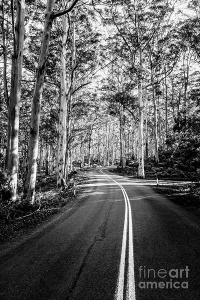 Wall Art - Photograph - Boranup Karri Trees by Jason Knott