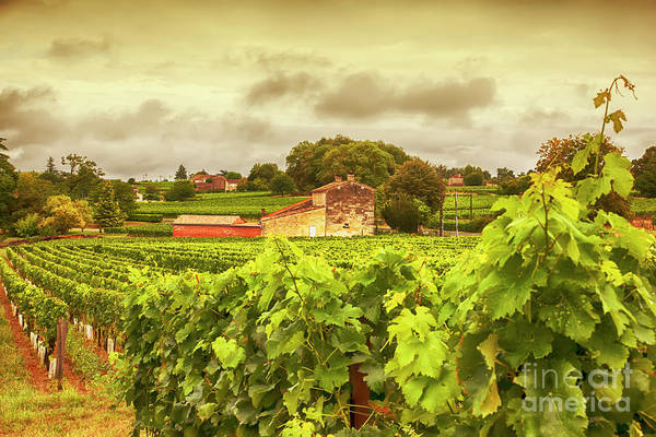 Photograph - Bordeaux Country Side Panorama  by Ariadna De Raadt