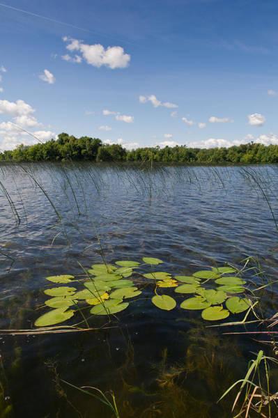 Photograph - Borden Lake Scene by Gary Eason