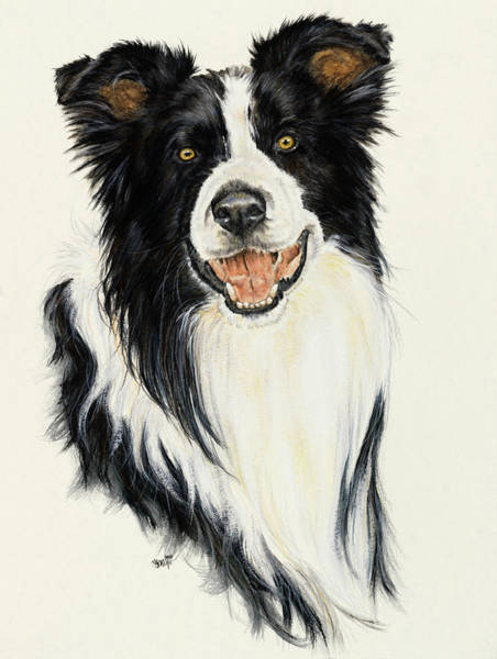 Painting - Border Collie In Watercolor by Barbara Keith