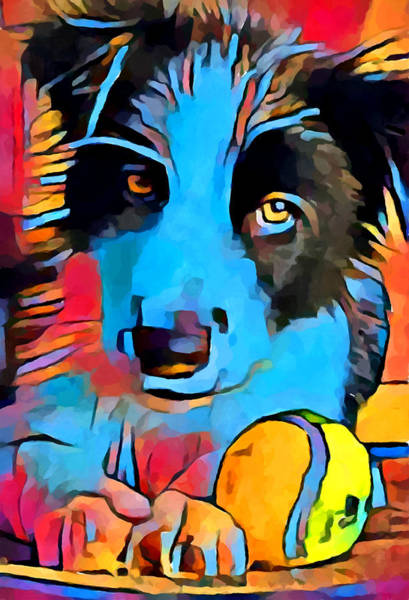 Wall Art - Painting - Border Collie by Chris Butler