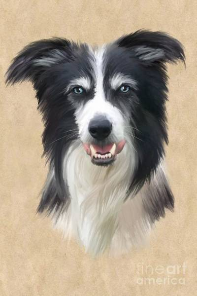 Furry Digital Art - Border Collie by John Edwards