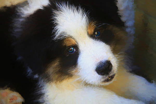 Painting - Border Collie Puppy - Painted by Ericamaxine Price