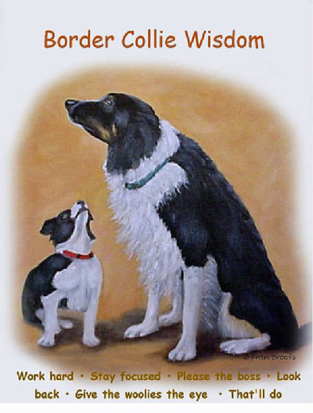 Painting - Border Collie Wisdom by Fran Brooks