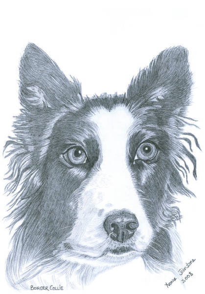 Furry Drawing - Border Collie by Yvonne Johnstone