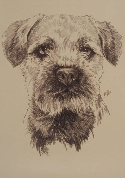 Wall Art - Drawing - Border Terrier by Barbara Keith