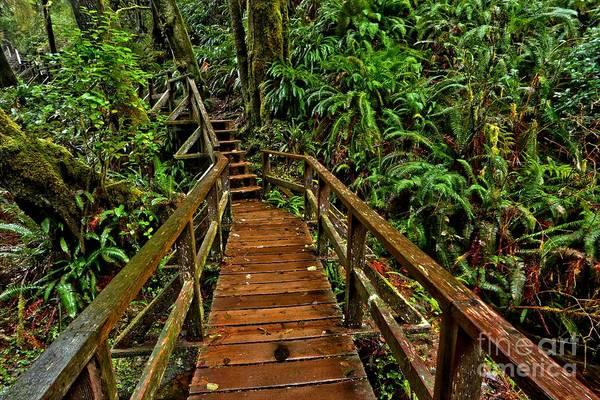 Ucluelet Photograph - Bordwalk Through The Ferns by Adam Jewell