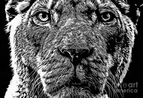 Ink Photograph - Born Free Lion by Edward Fielding
