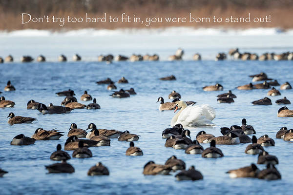 Photograph - Born To Stand Out by Bill Wakeley
