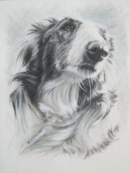 Painting - Borzoi In Watercolor by Barbara Keith