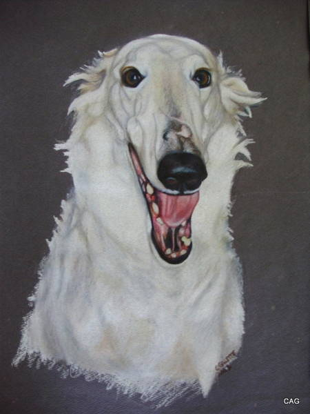 Sight Hound Drawing - Borzoi by Carol Gillette