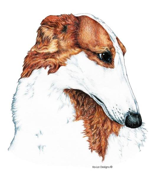 Sight Hound Drawing - Borzoi by Kathleen Sepulveda