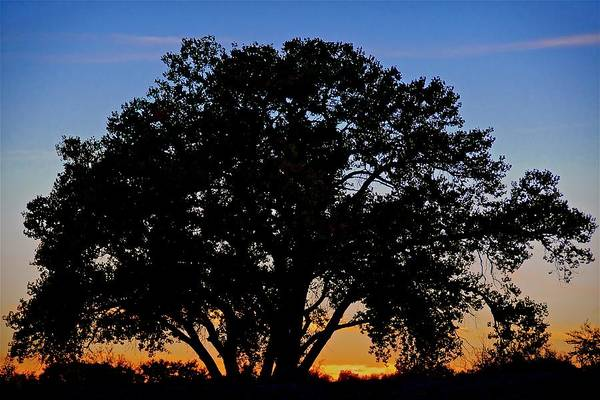 Photograph - Bosque Cottonwood Sunset, Albuquerque, Nm by Flying Z Photography by Zayne Diamond