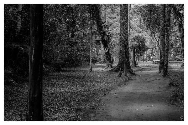 Photograph - Bosque Do Silencio-campos Do Jordao-sp by Carlos Mac