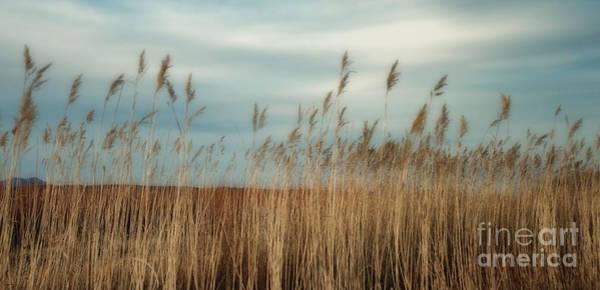 Photograph - Bosque Grasses by Susan Warren