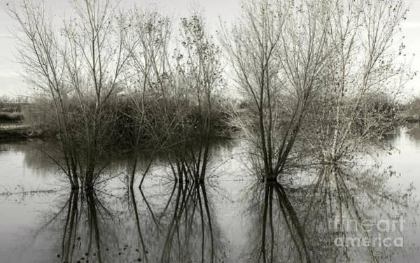 Photograph - Bosque Reflection by Susan Warren