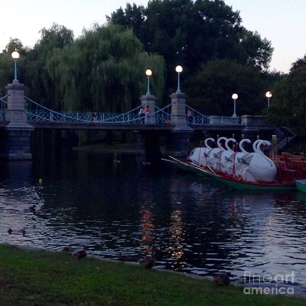 Swan Boats Photograph - Boston Public Gardens In Early Evening by Gina Sullivan