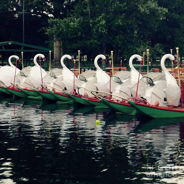 Swan Boats Photograph - Boston Public Gardens Swan Boats  by Gina Sullivan