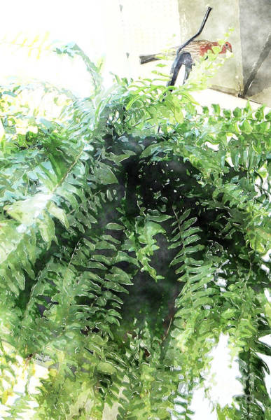 Photograph - Boston Fern With Visitor by Donna Bentley