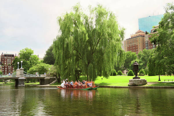 Photograph - Boston Garden Swan Boat by Sue Collura