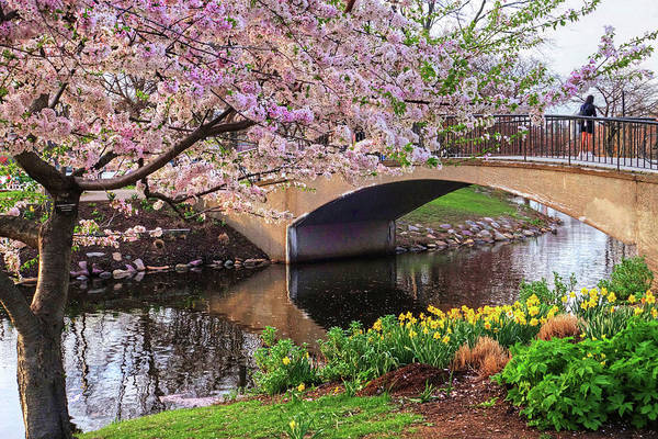 Photograph - Boston Ma Spring Tree On The Charles River Esplanade Boston Ma by Toby McGuire