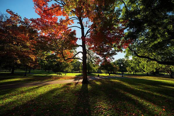 Photograph - Boston Public Garden Autumn Tree Morning Light by Toby McGuire