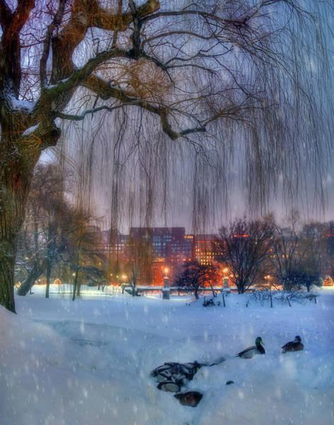 Photograph - Boston Public Garden In Snow by Joann Vitali