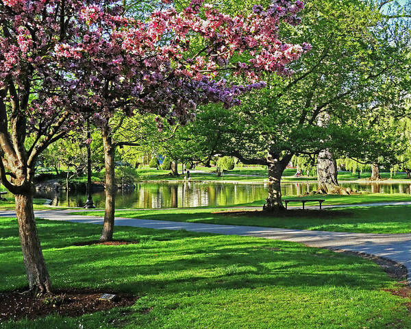 Photograph - Boston Public Garden Pond Through The Cherry Blossom Spring Day by Toby McGuire
