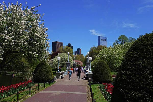 Photograph - Boston Public Garden Spring Tree Bridge Boston Ma by Toby McGuire