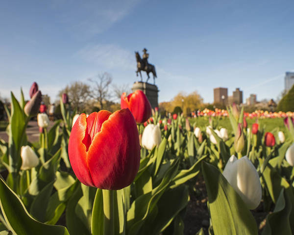 Photograph - Boston Public Garden Tulips And George Washington Statue by Toby McGuire