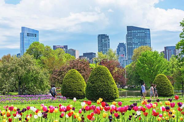 Photograph - Boston Public Garden Tulips Boston Skyline Boston Ma by Toby McGuire